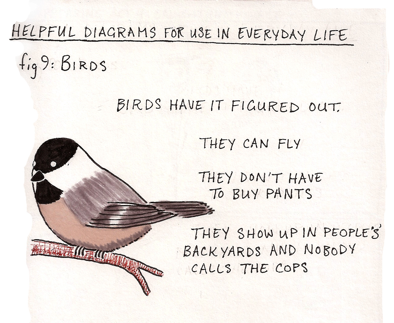 Today's strip is for the birds.